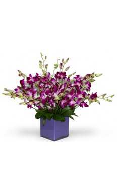 20 Purple Orchids