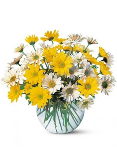 Dashing Daisies Bouquet