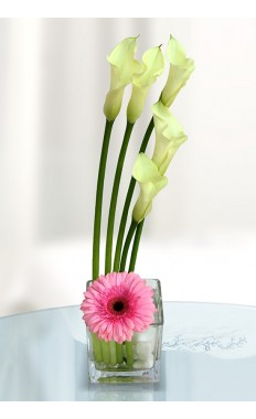 Simple Calla Lilly