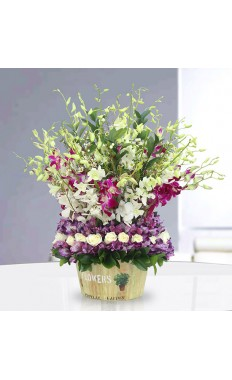 Orchids in a Basket