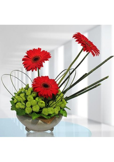Red Gerbera  Bowl