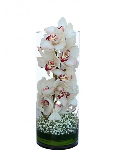 White Cymbidium Flowers